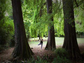 asana albero
