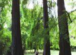 yoga asana albero